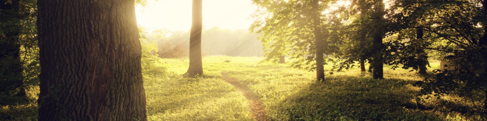 sunlight-on-green-forest-W3R2FM5_cropped